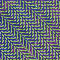 animal collective album cover