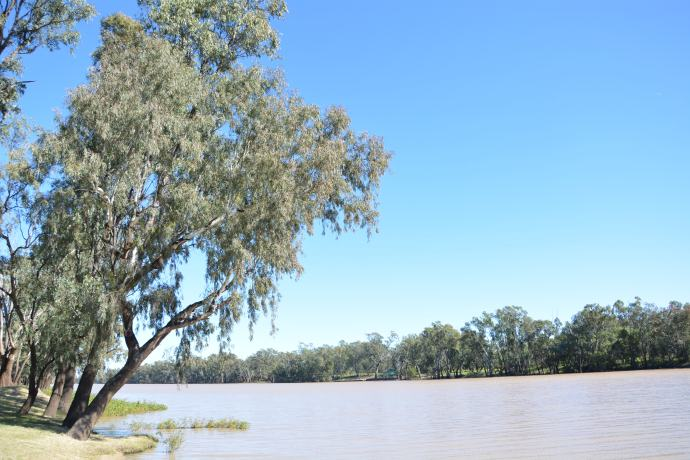 Tarawera, Queensland - Wikipedia