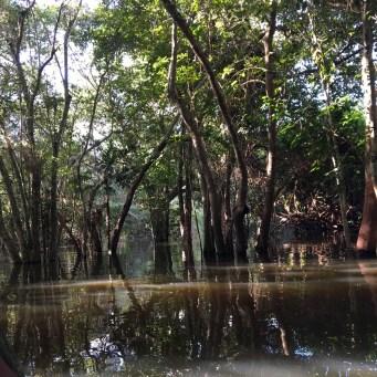 Matt canoeing on the Amazon