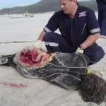 Reunion Island Claims Third Fatal Shark Attack Victim in a Year