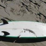Surf Beach Shark Attacks Claim Another Life