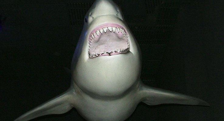 Shark Attack on Outrigger Sends Santa Barbara Woman into Ocean