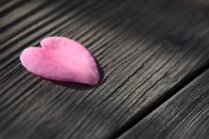 1378507_heart_shaped_flower_petal.jpg