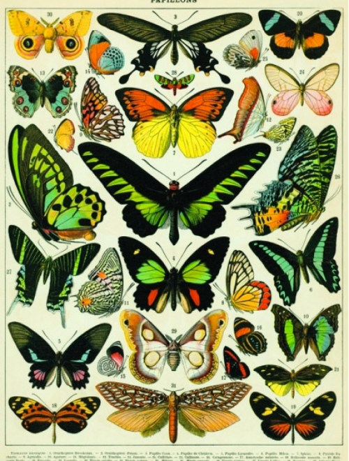 Rockett-St-George-Butterfly-print