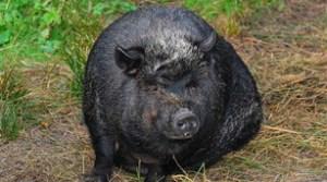 Innerer Schweinehund ade