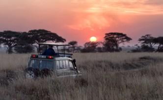 La Tanzanie : l'eldorado pour les amoureux (de la faune)