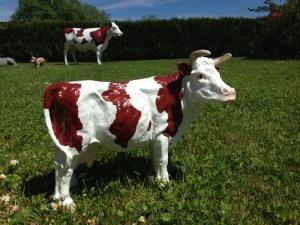 Petite vache tête tournée