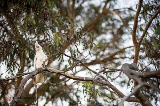 Bird In The Trees