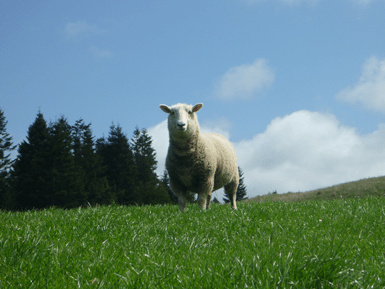 EL-Smaller-for-Lamb-Section