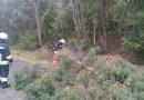 Umgestürzte Bäume in Schlierenzau