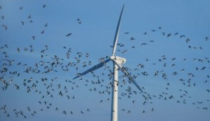 wind turbine mill birds bats