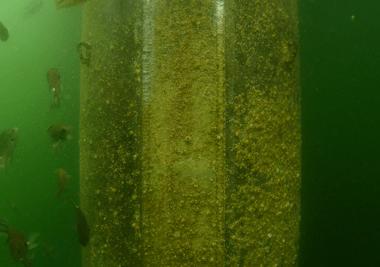 水中目視調査