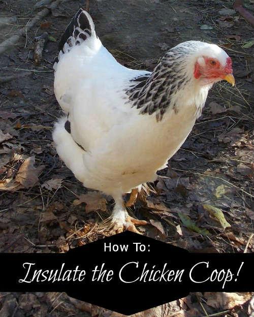 How to insulate a chicken coop, Fiberartsy.com