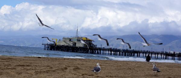DSC00291_seagulls w pier in bg_600@72