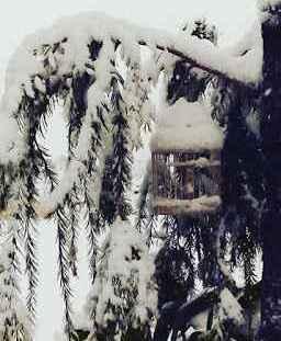 Χιόνι, χιόνι, χιόνι!