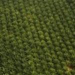 Ouverture du congrès mondial des huiles de palme à Abidjan