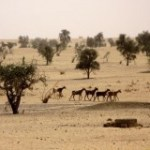 Mauritanie : attribution imminente de 31 hectares au saoudien Al Rajihi