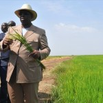 Senegal: le prix du riz de la vallée fixé