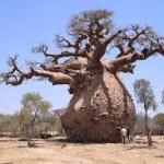 La BAD lance «Le Forum Baobab»