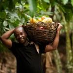 Un prix  d'achat «historique» de 1 000 francs CFA le kilogramme pour le cacao ivoirien
