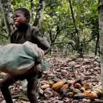 Cacao: l'OMCC construit une école primaire en Côte d'Ivoire