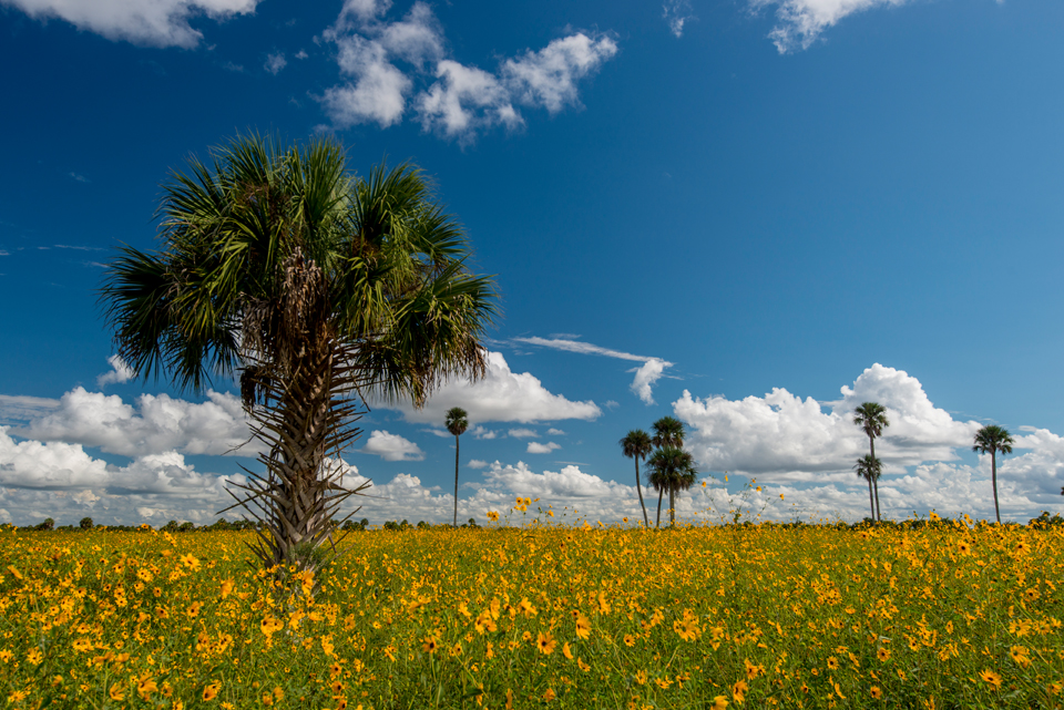 Lake Jesup Wildflower Fields
