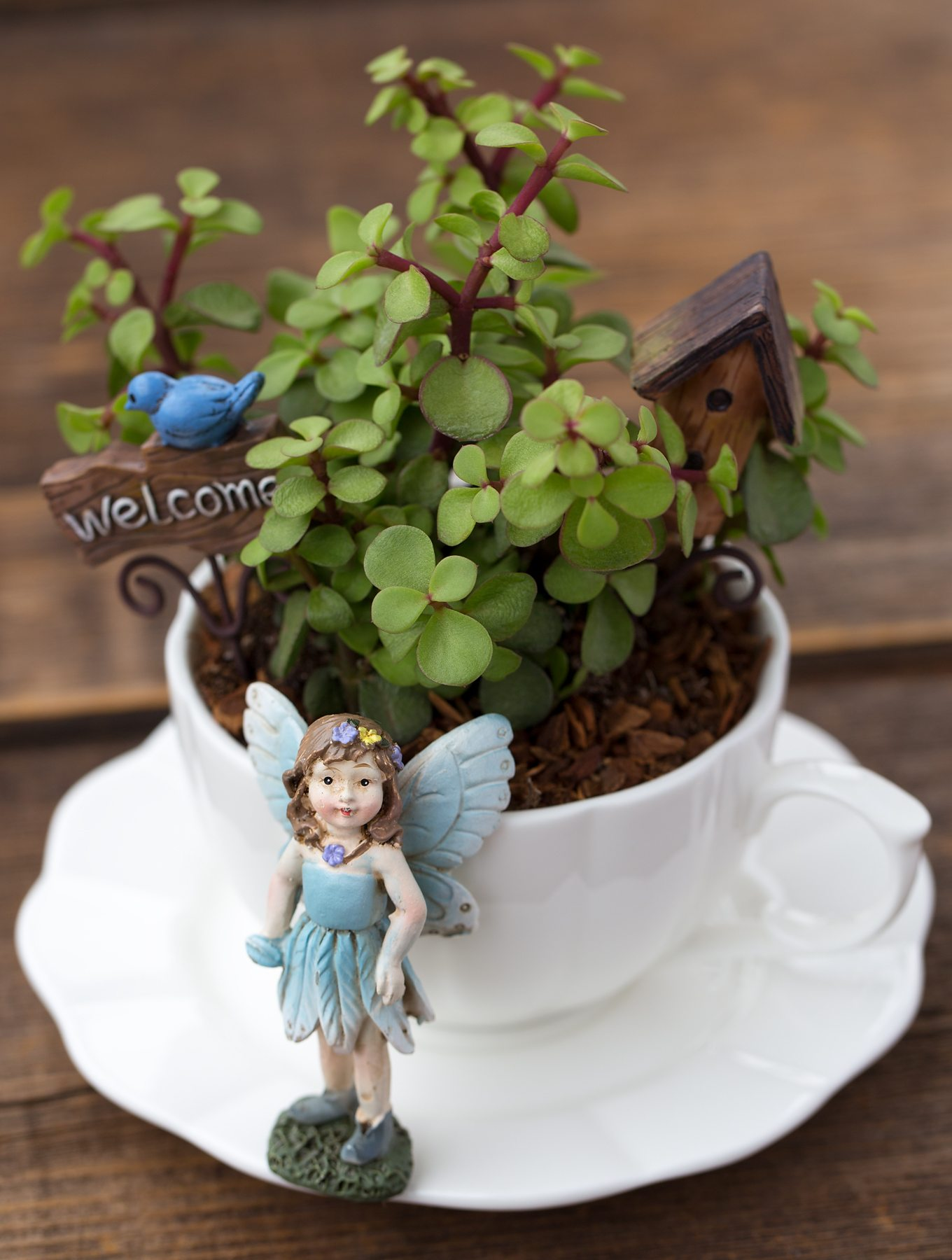 Fullsize Of Fairy Garden Instructions