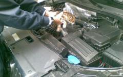 Gattino incastrato nel motore di un'auto, liberato