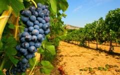 Vino toscano, vola l'export: +50% in cinque anni