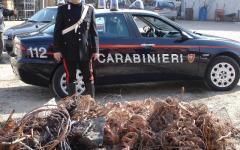 Firenze, bloccato ladro con mezza tonnellata di rame