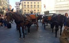 Firenze: aggredito alle Cascine uno stalliere delle carrozze a cavallo