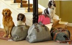 La Toscana apre al Pet Friendly: in vacanza con i propri animali domestici
