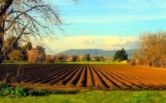 Imu sui terreni agricoli: ecco il nuovo elenco dei comuni italiani dove si pagherà il 10 febbraio e gli oltre 3500 esentati