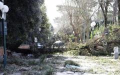 Maltempo: devastati dal vento e chiusi il giardino di Boboli, a Firenze, e le ville medicee della Petraia e di Poggio a Caiano