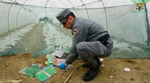 Un'agente della Forestale durante il sequestro dei semi di ortaggi a Prato