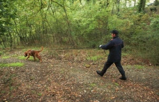 Un cani molecolare bloodhound durante la ricerca di una persona scomparsa