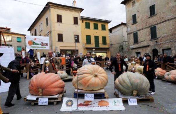 Foiano della Chiana, la zucca più grande d'Italia: 482 Kg