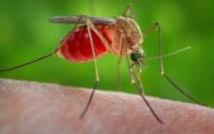 Sanità, Virus Zika: l'OMS lo ha dichiarato emergenza internazionale. Soprattutto per le donne incinte
