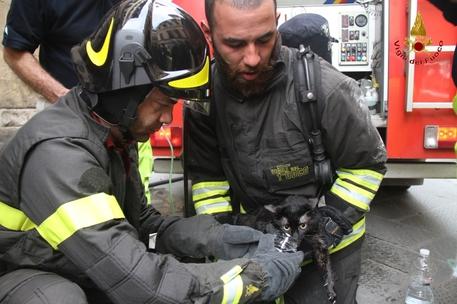 Il gatto rianimato dal tempestivo intervento dei vigili del fuoco