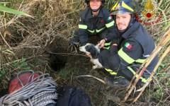 Empoli: cane da caccia finito in una buca piena d'acqua soccorso dai Vigili del fuoco