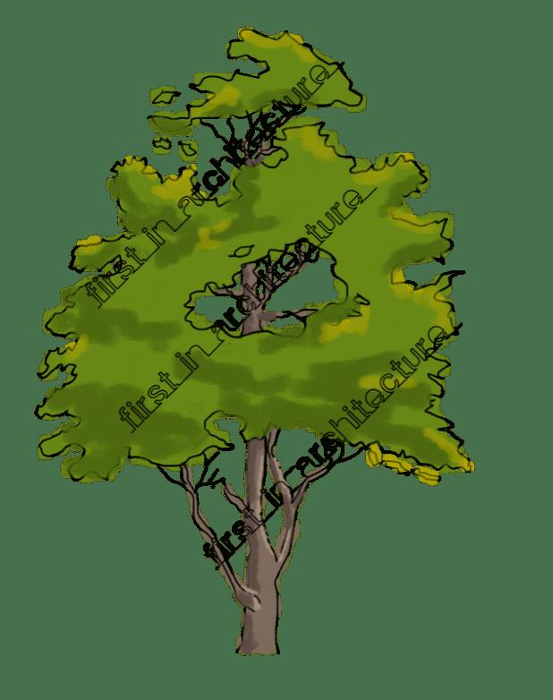 FIA Trees Elevation 01