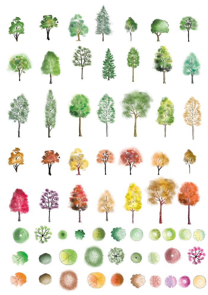 Colour trees FIA