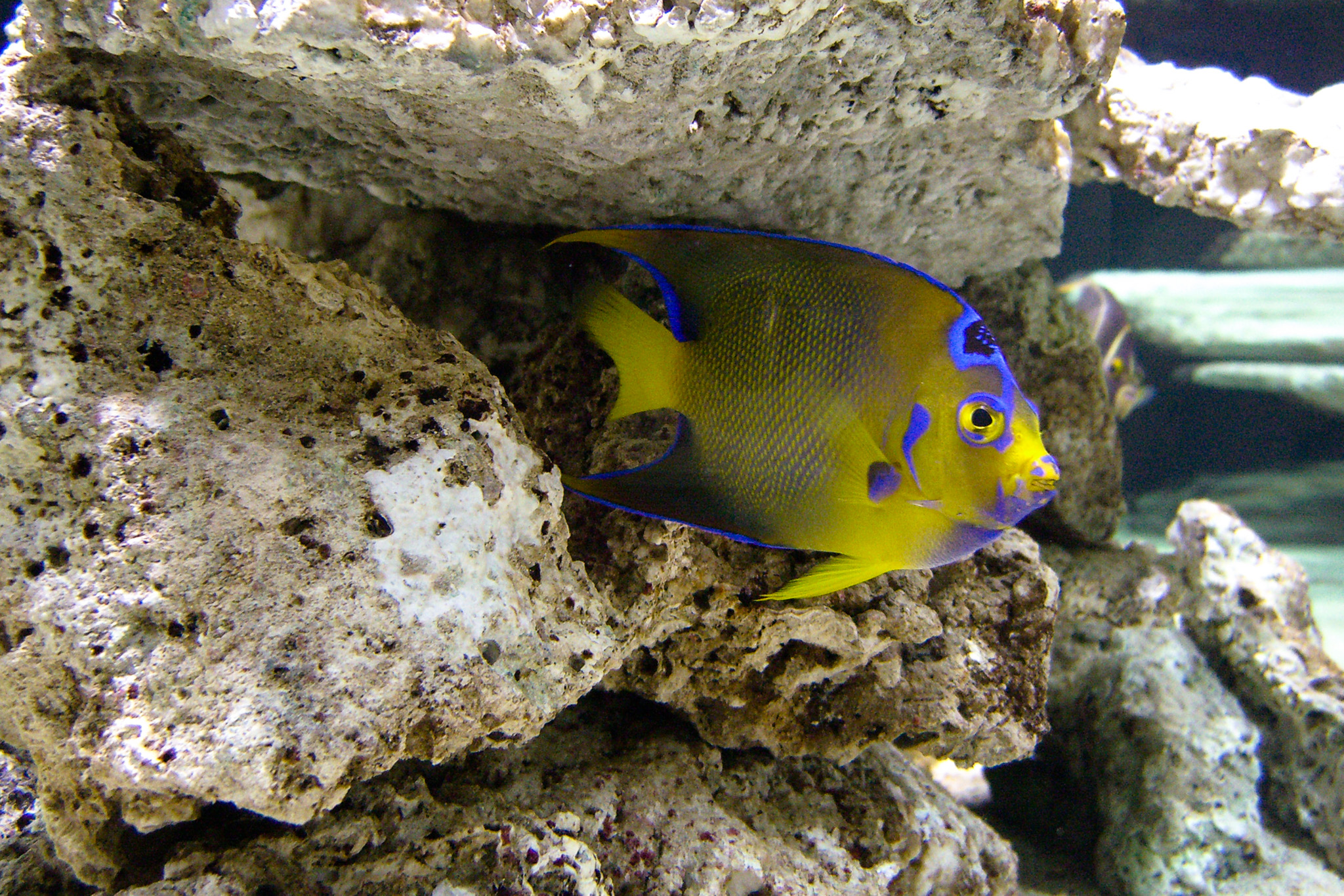 Fish aquarium utah - We Ve Got Access To A Great Range Of Fish And Coral And Can Even Do Outdoor Ponds And Koi For The Summer Months Enjoy The Photos