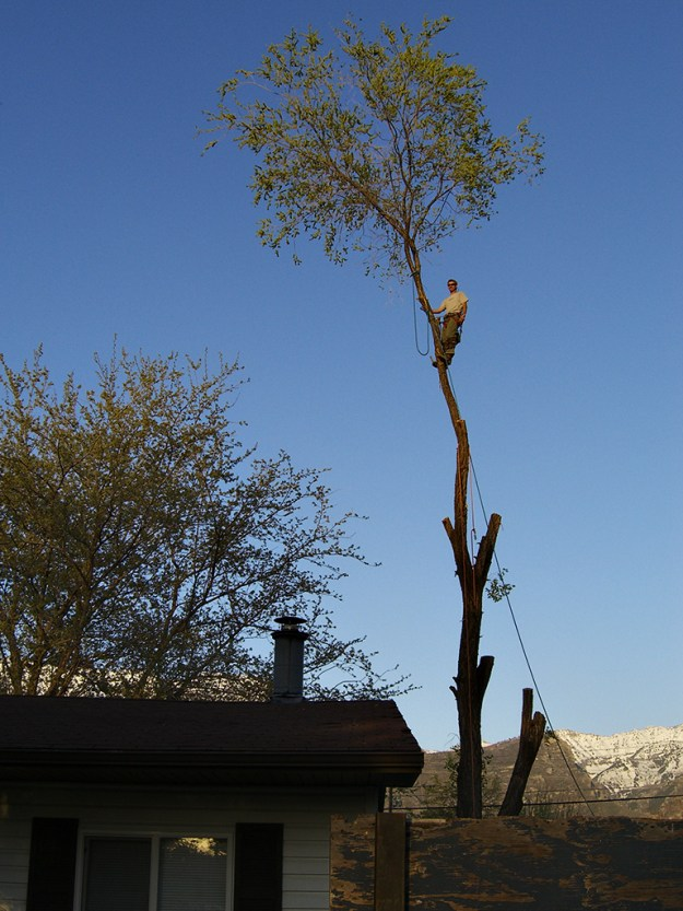 Randy Climbing a Tree