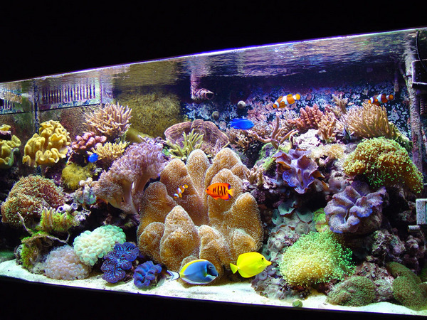Marine tank, got a few questions [Forums   Marine   Help and Advice