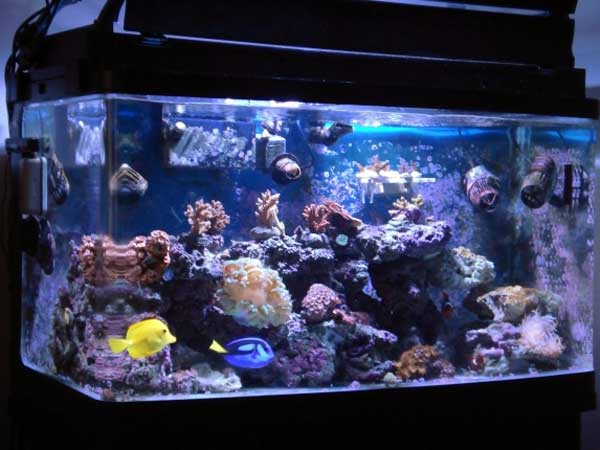 Saltwater Fish Tanks For Beginners