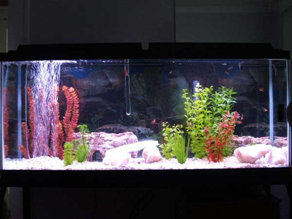 55 fish tank 55 gallon freshwater planted fish tank for 55 gallon aquarium decoration ideas