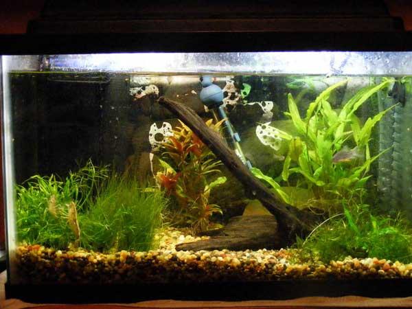 Pet fish for 10 gallon tank top fin 10 gallon hooded for Petsmart fish aquariums