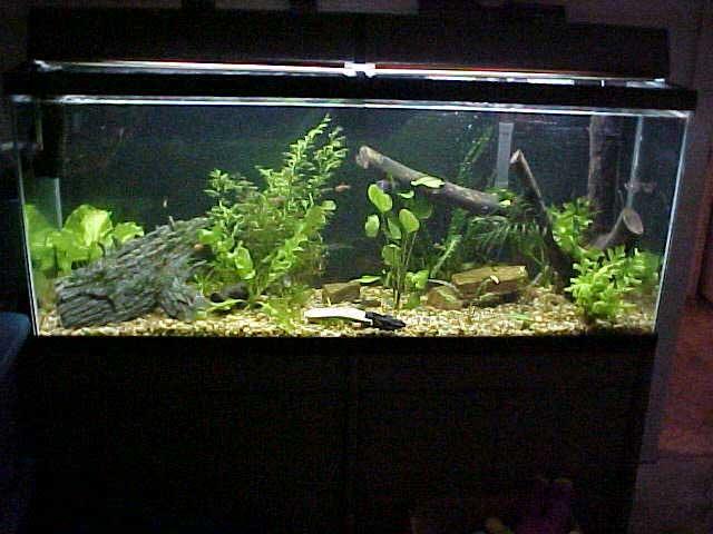 55 gallon fish tank setup ideas current aquarium setups for Fish tank setup ideas