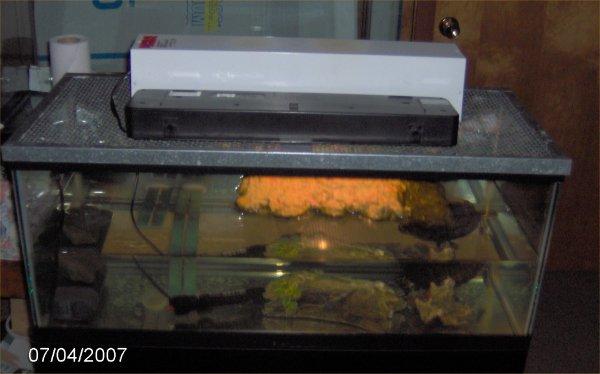 Last photo of 20 gallon turtle setup .
